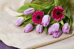 Lilac tulips and pink gerbera on a gold background Stock Images