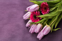 Lilac tulips and pink gerbera on a purple background Royalty Free Stock Photo
