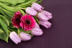 Lilac tulips and pink gerbera on a purple background Royalty Free Stock Photography