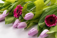 Lilac tulips and pink gerbera on a white background Royalty Free Stock Photo