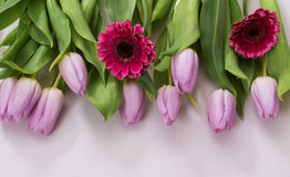 Lilac tulips and pink gerbera on a white background Royalty Free Stock Photography