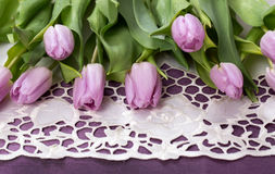 Lilac tulips and pink gerbera on a white and purple background Stock Images