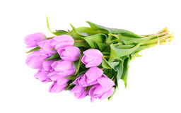 Lilac tulips on the white Stock Photography