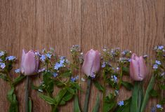 Flower, pink, rose, nature, bouquet, spring, garden, plant, white, blossom, beauty, green, bloom, purple, flowers, tulip, petal, f Stock Photos