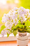 Lilac in vase Royalty Free Stock Photos