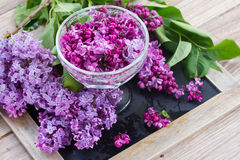 Lilac in vase Stock Images