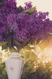 Lilac in a Vase in sunset light Stock Photography