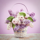Lilac in vase. Vintage retro hipster style version.  Royalty Free Stock Images