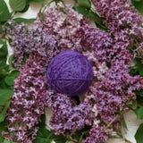 Lilac verwarring van garen onder de bloemen van sering Royalty-vrije Stock Afbeelding