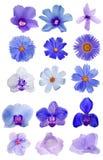 Lilac vijftien bloeien collcetion op wit wordt geïsoleerd dat Stock Fotografie