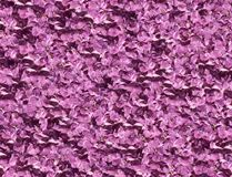 Lilac violet background Royalty Free Stock Image