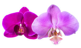 Lilac and violet orchids is isolated on the white  background Stock Photos