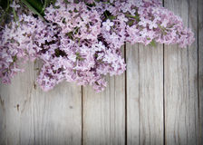 Lilac on weathered wood Royalty Free Stock Image