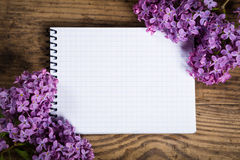 Lilac on white blank sheet Royalty Free Stock Image