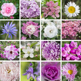 Lilac, white and pink flowers. Beautiful lilac, white and pink flowers collage stock photos