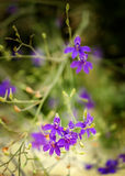 Lilac wild flowers on a beach. Selective focus with a blurred background Royalty Free Stock Image