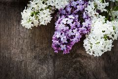 Lilac on wood Royalty Free Stock Image