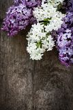 Lilac on wood Stock Photos