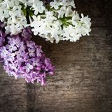 Lilac on wood Royalty Free Stock Images
