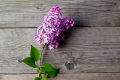 Lilac on wood Stock Photography