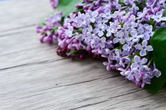 Lilac flower bouquet on wooden background royalty free stock images
