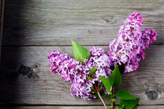 Lilac on wooden background royalty free stock images