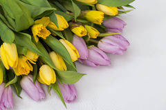 Lilac and yellow tulips and daffodils on a white background Royalty Free Stock Photography