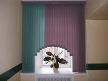Lilac zonneblinden voor uw bureau Stock Afbeeldingen