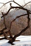 Lilack-Baum 2 Stockfoto