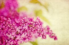 Lilacs Royalty Free Stock Images