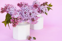 Lilacs Stock Image