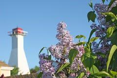 Lilacs & farol Imagem de Stock Royalty Free