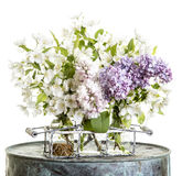 Lilacs and apple blossoms Stock Image