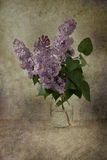 Lilacs in Bloom Stock Image