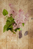 Lilacs in Bloom Royalty Free Stock Images