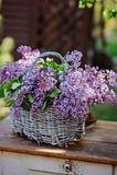 Lilacs bouquet in basket on vintage bureau in spring garden Royalty Free Stock Photo