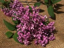 Lilacs on Burlap Royalty Free Stock Image