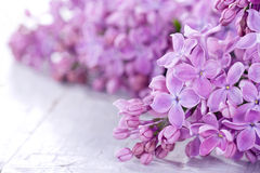 Lilacs in closeup Stock Photo