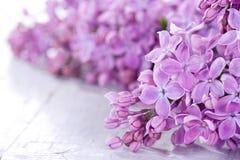 Lilacs in closeup Stock Photo
