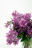 Lilacs with Copy Space Above. Vertical closeup of lilac blossoms isolated on white with space for text Stock Photography