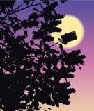 Lilacs de florescência Fotos de Stock Royalty Free