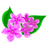 Lilacs in dew. Lilac in dew on a white background vector illustration Royalty Free Stock Photo