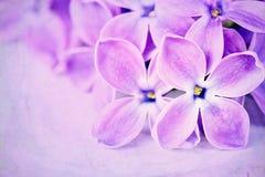 Lilacs em um fundo textured roxo Fotografia de Stock