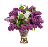 Lilacs in a glass vase Stock Image