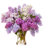 Lilacs in a glass vase. Isolated on white background Stock Images