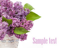 Lilacs in a glass vase Royalty Free Stock Images