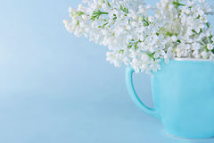 Lilacs on a light blue background royalty free stock photography