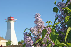 Lilacs & Lighthouse. Lilacs with a lighthouse in the distant background royalty free stock image