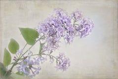 Lilacs with pastel texture Stock Photos