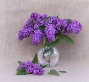 Lilacs in the Vase Royalty Free Stock Images